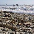 Pacific Coast, WA