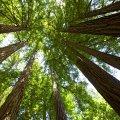 Muir Woods NP, CA